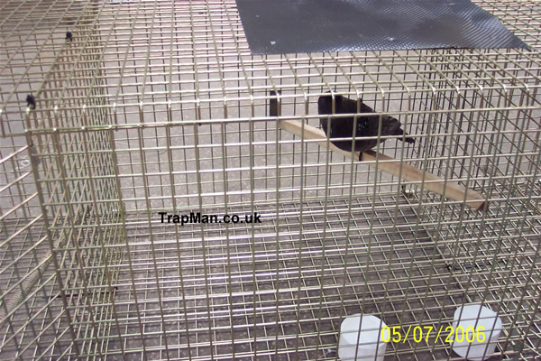 crow trap decoy compartment