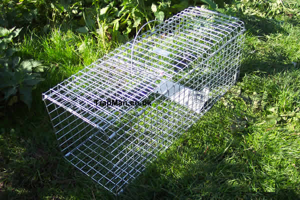 Folding rabbit trap
