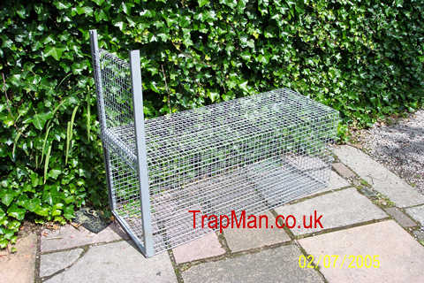 The Trap Man Humane Trap Live catch Fox cage Traps, Trapping Foxes