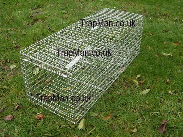 feral cat trap in the set position