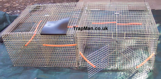Two larsen corvid traps back to back making a true multi catch larsen trap four top entry and two side entry with decoy compartment