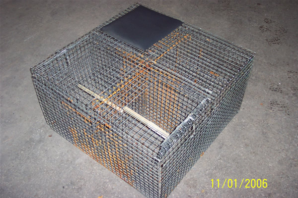 larsen corvid combination trap